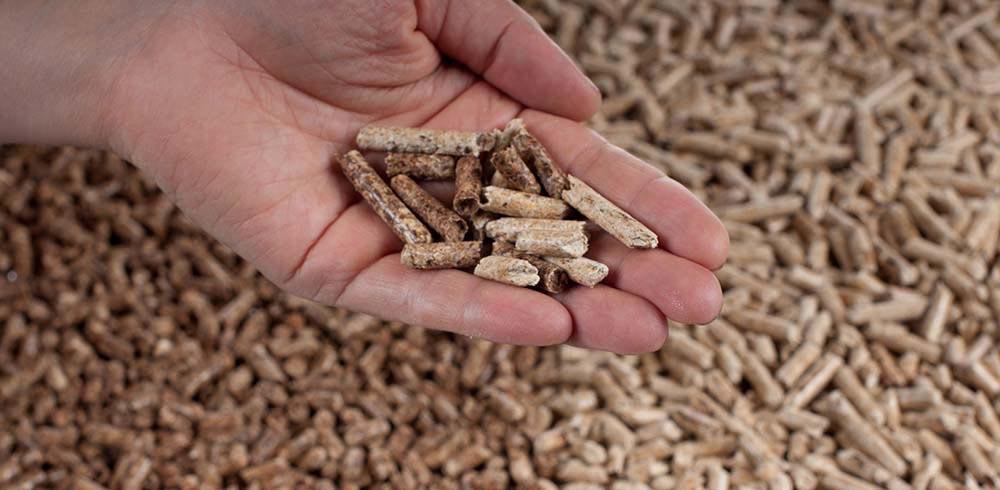 la-biomasa-como-fuente-de-energia
