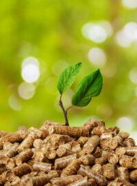 ¿Sabías que la biomasa es una energía sostenible?