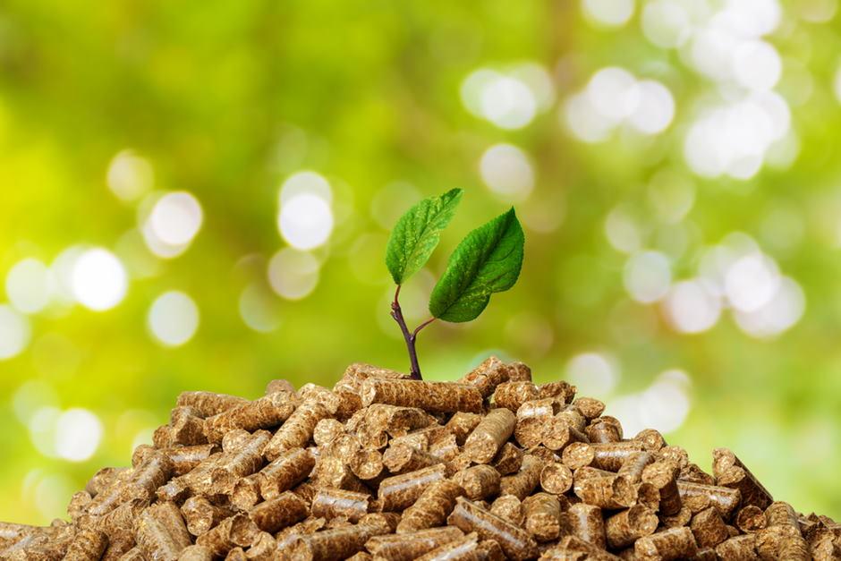sabias-que-la-biomasa-es-una-energia-sostenible